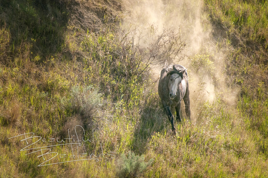 Have you visited the wild horses at Theodore Roosevelt National Park?