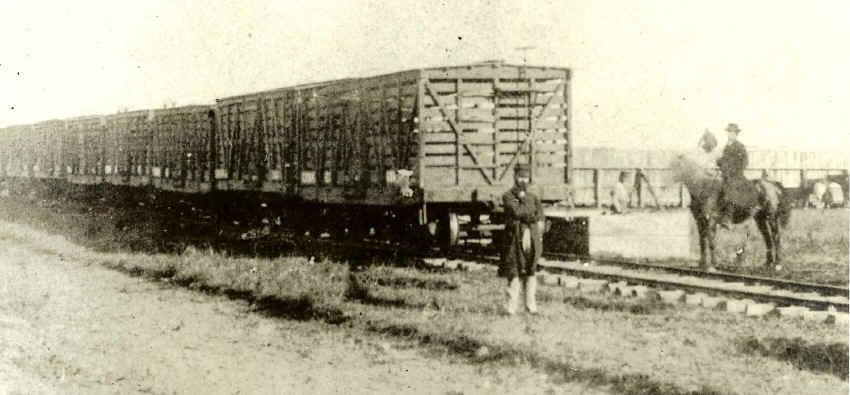 Cattle cars hauled beef from the west to Chicago in 1870