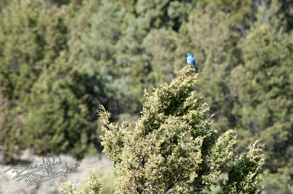 Look! A bluebird! A sign of spring — Yippee!