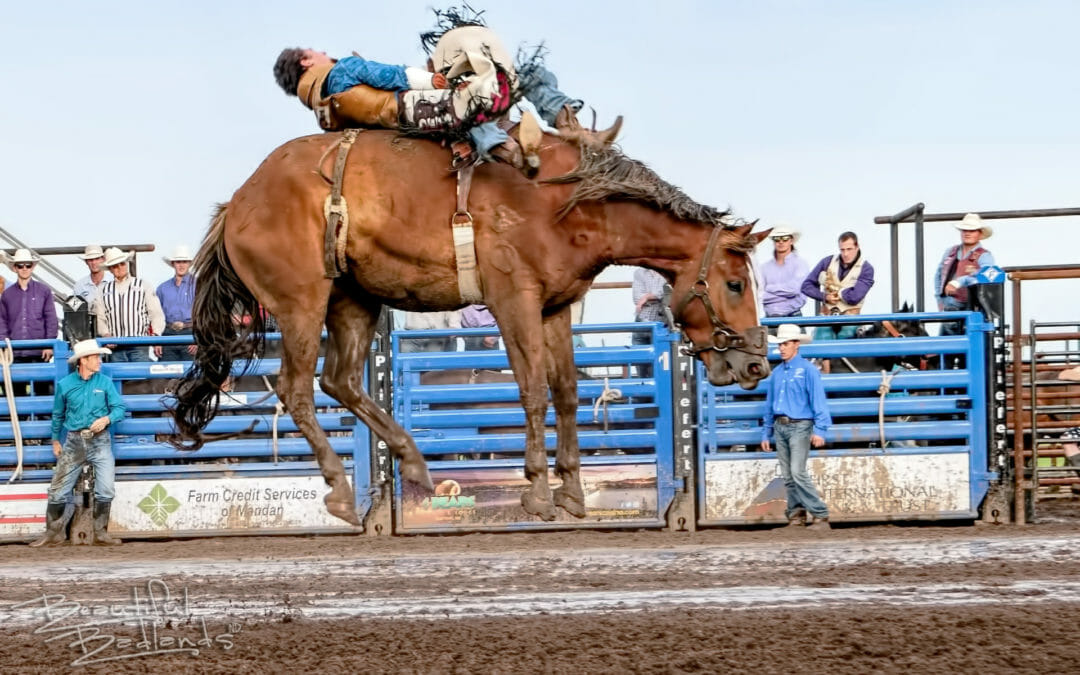 Photoblog — Get closer. See what you missed at the Killdeer Rodeo