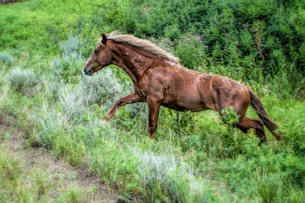 wild horses badlands theodore roosevelt national park.