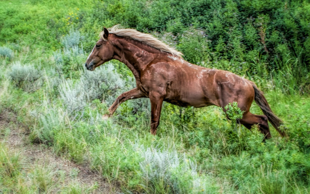 Saturday Snapshot Friendly Wild Horses