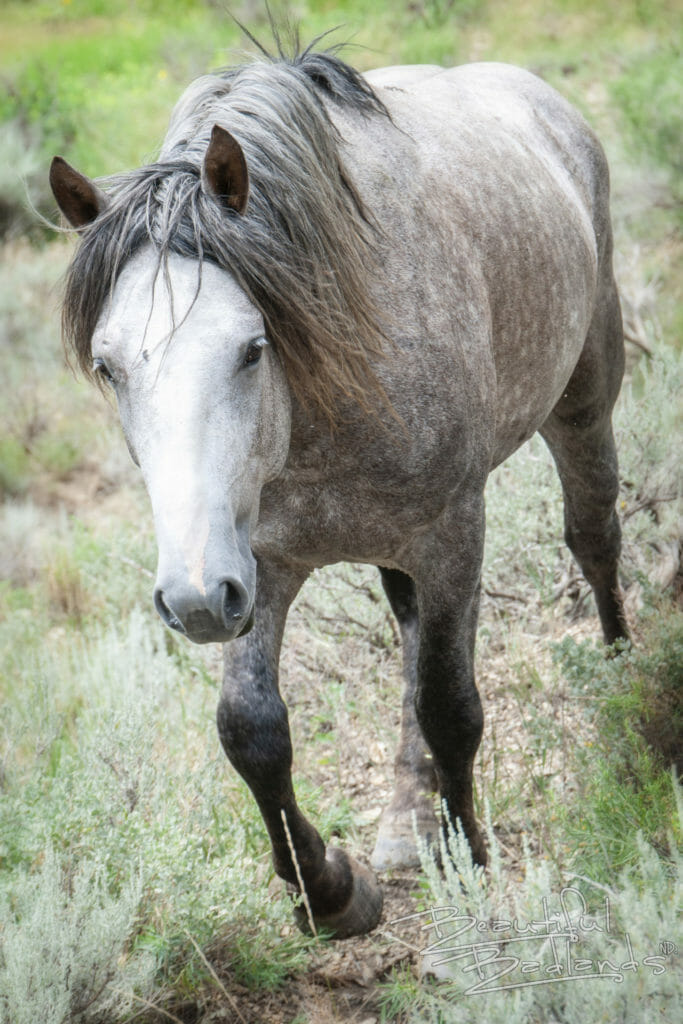 wild horse badlands theodore roosevelt national park