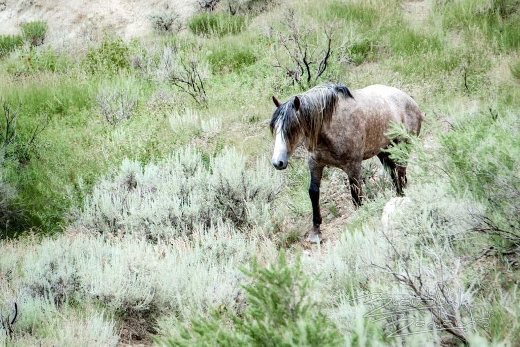 wild horse badlands