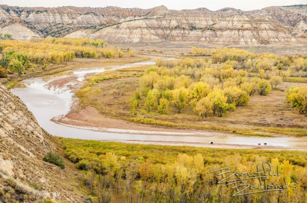 North Dakota Badlands, Badlands of North Dakota, Little Missouri River, fall colors, yellow