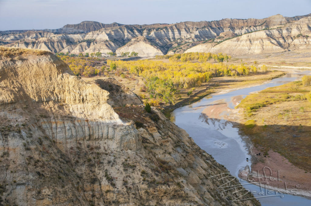 North Dakota Badlands, Little Missouri River, Yellow Cottonwoods, Autumn