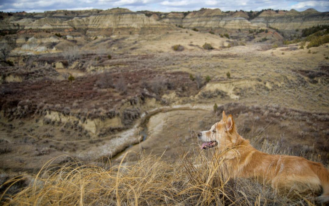 Hiking? Take your dog, dressed in blaze orange