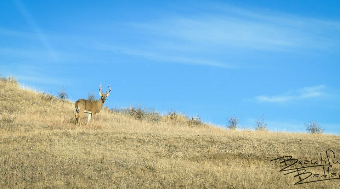 Leaping Deer!  They're Everywhere! – Snapshot Saturday