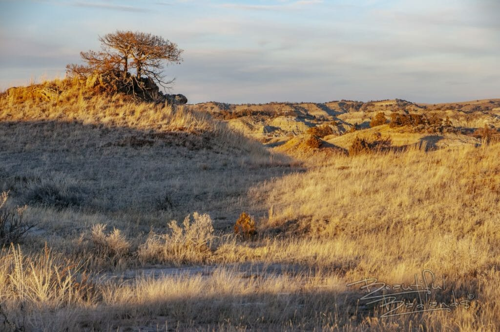 Scrub tree on hill at sunset