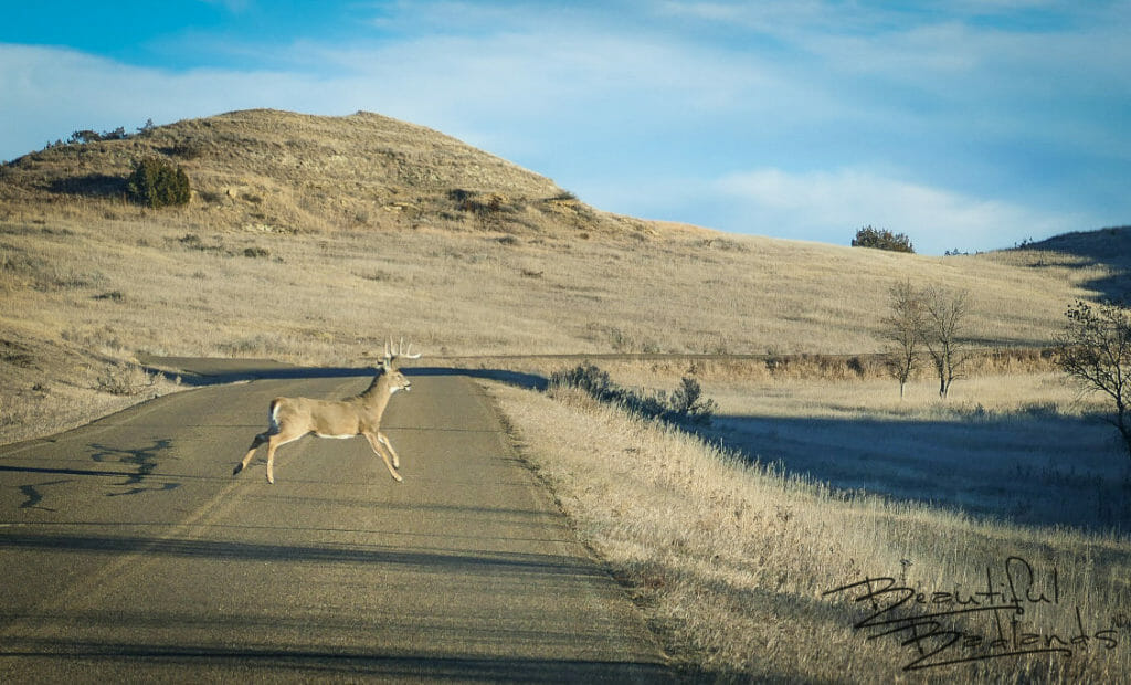 Across the Road in One Leap, Theodore Roosevelt National Park, North Dakota