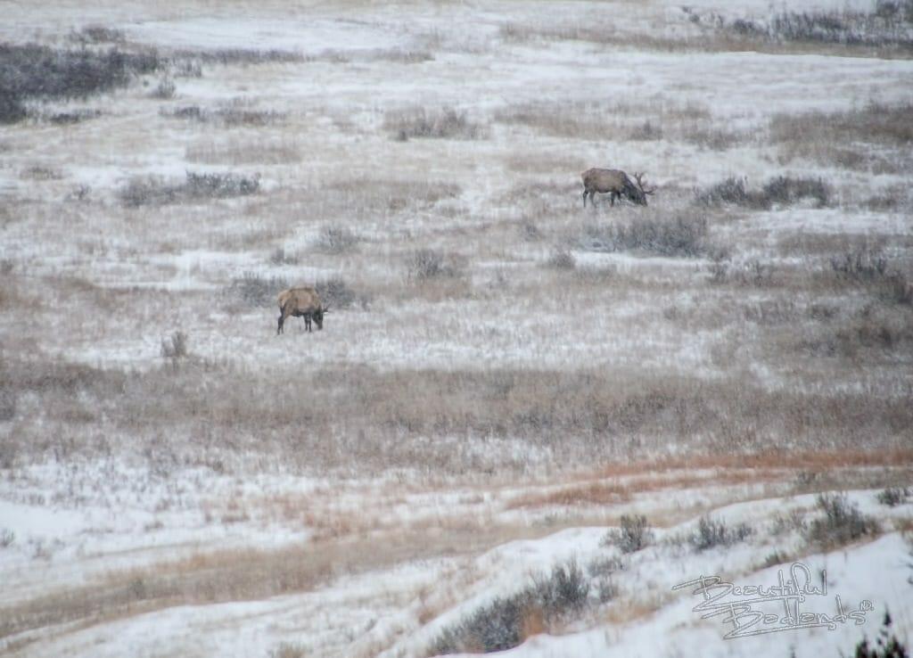 elk graze down below in a valley