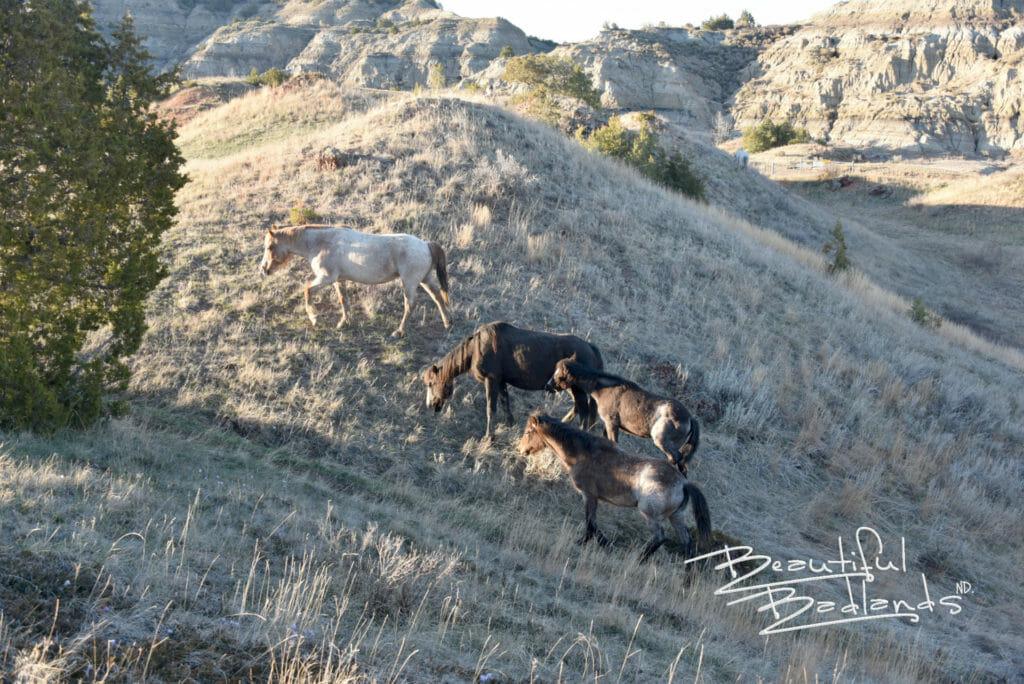 four wild horses
