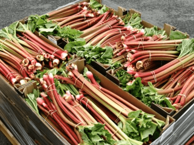 That's A Lot Of Rhubarb!