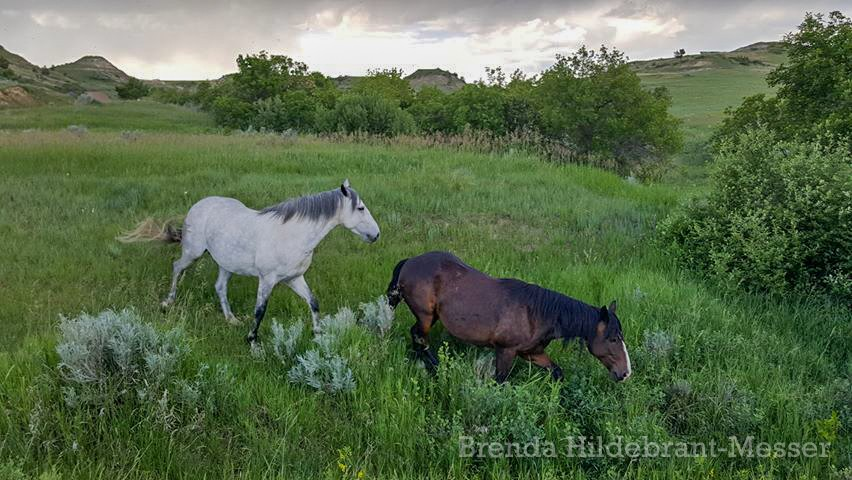 Two Wild Horses in the Green Grasses of Theodore Roosevelt National Park, North Dakota by Brenda Hildebrant-Messer