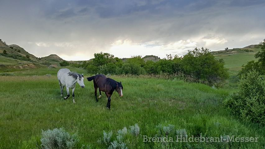 Two Wild Horses in Front of the Storm, Theodore Roosevelt National Park in North Dakota, by Brenda Hildebrant-Messer
