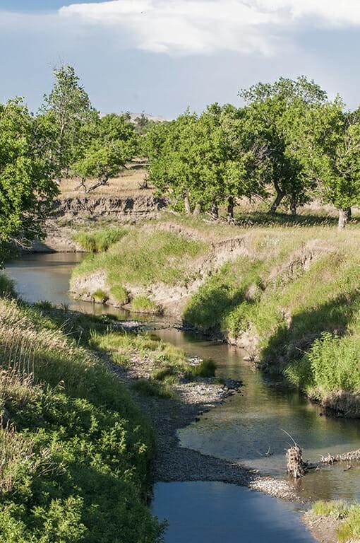 start of Little Missouri River through grassy banks