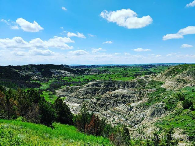 Brilliant Summer Green in Theodore Roosevelt National Park in North Dakota, by Bridgett Weis. June 2019